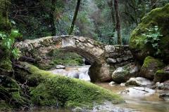Pont sur le Bruguet (Valbonne)